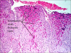 Mamalis Eyelis 20 labeled