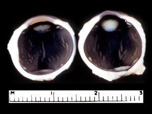 Mamalis Lens 31 unlabeled
