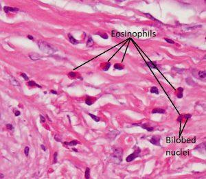 Mamalis Cellular Histo 03 labeled