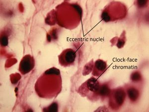 Mamalis Cellular Histo 07 labeled