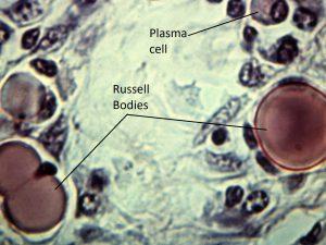 Mamalis Cellular Histo 08 labeled