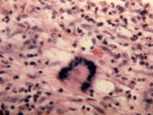 Mamalis Cellular Histo 10 unlabeled