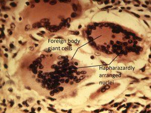 Mamalis Cellular Histo 13 labeled