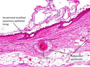Mamalis Orbit 16 Labeled