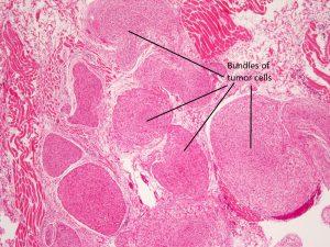 Mamalis Orbit 66 labeled