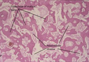 Mamalis Orbit 73 labeled