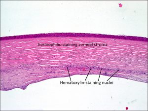 Mamalis Stains 01 labeled